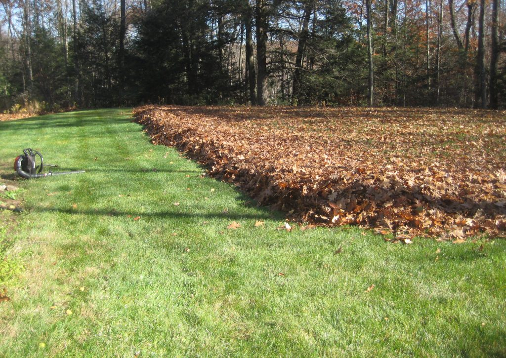 new-jersey-leaf-cleanup-service